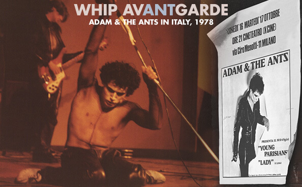 Whip AvANTgarde header